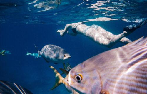 Snorkel na Ilha do Faial