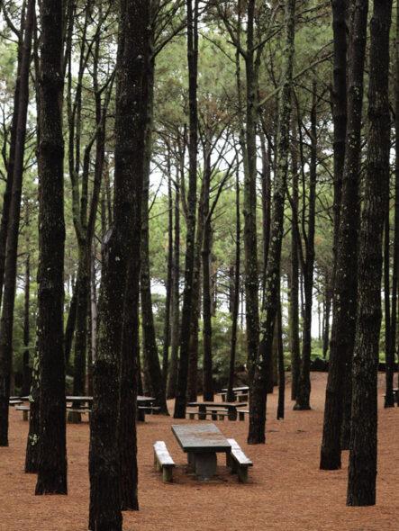 Reserva Florestal de Recreio de Santa Luzia