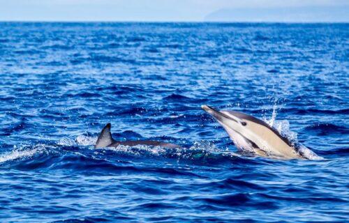 Observação de baleias e Golfinhos